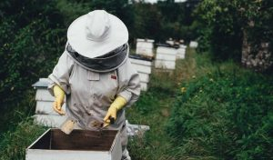 18 Gift Ideas for Bee Lovers and Beekeepers