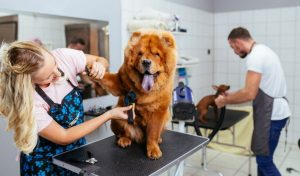 12 Woofing Great Gifts for Dog Groomers