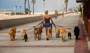 9 Terrier-rific Gift Ideas for Dog Walkers