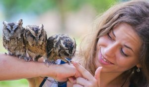 16 Wise Gift Ideas for Owl Lovers
