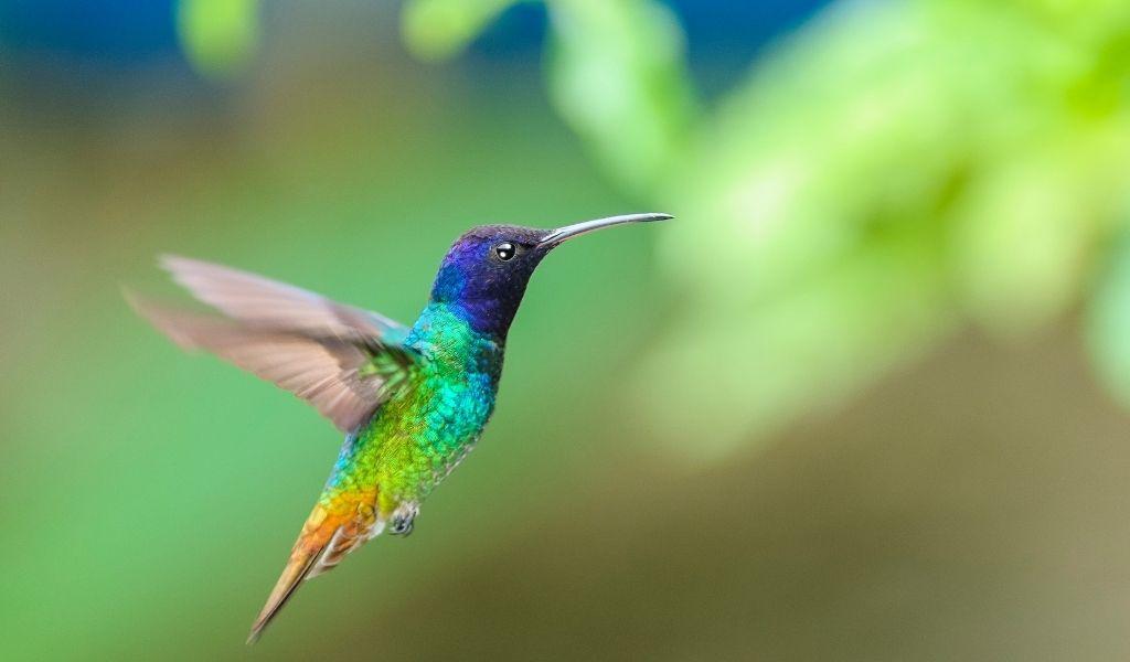 14 Hum-Mazing Hummingbird Gift Ideas